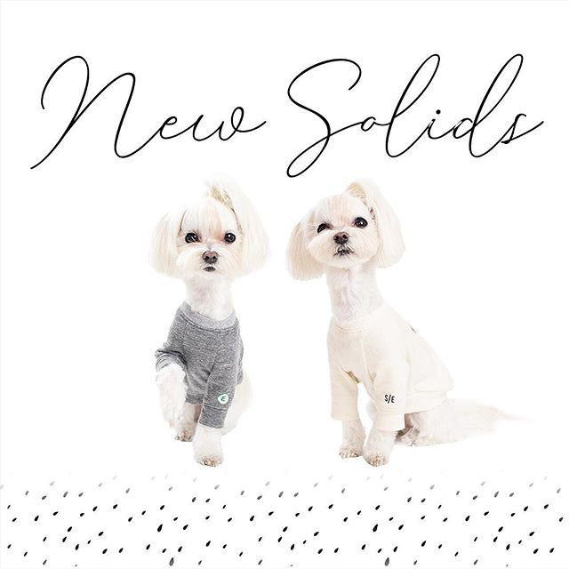 New tees are available now 😊👋 on StudioEloise.com Check out @StudioEloise story to find out about the promo code🏷 • While I was shopping clothes for baby E👶, I found myself desperate looking for simple designs without all the cutesy slogans and appliqués. Then I thought Elly 🐶 also could use some solid color tees to go with her bandanas and bows! That's how and why we are introducing these two new solid color tees today. I hope you like these ☺️ • We're offering 15% off these new tees (until the store temporarily closes on 10th, promo code on our story) as a small thank you for remembering us after months of us being rather too quiet 🤧!! Thank you for being here with us today💗