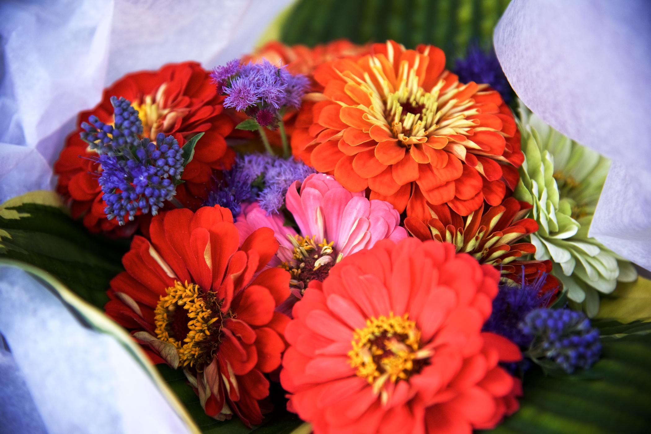zinnias bright and cheery.jpg