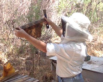 beth-bees.jpg