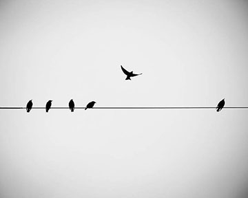 bird-on-wire.jpg