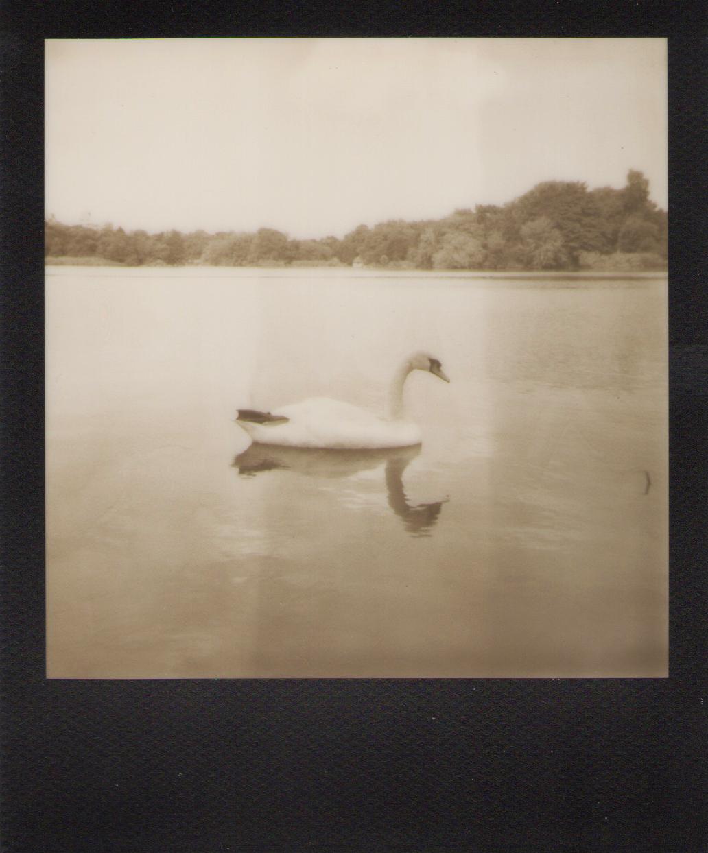 prospect park. 2012 expired polaroid