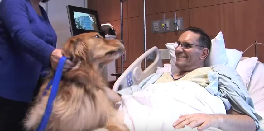 Therapy dog Lexi visits with a patient at Northwestern Memorial Hospital.