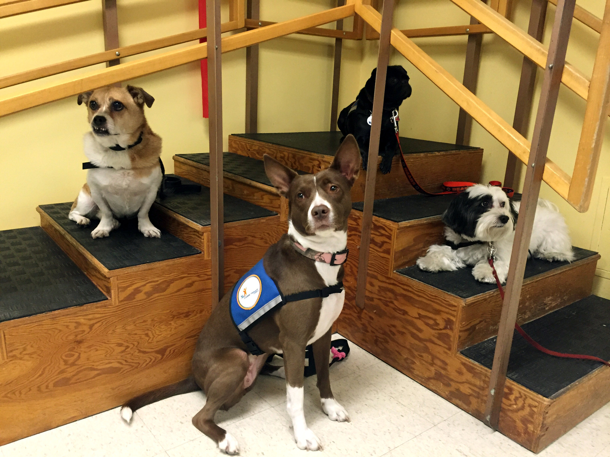 (Left to right) Harvey, Jae, Payton and Mango assist patients in physical rehabilitation.