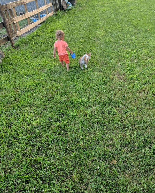 The boy trying to help with some leash training for Kobe. He really just loves the dogs.  #zzkennel #hybrid #foreverhome #pomsky #pomskypuppy #pomskynation #pomskylife #pomskiesofinstagram #pomskies #pomskylove #pomskyadventures #pomskybabies #pomskylove  Check out our pups @Pomsky_Foxie @Tauna_the_pomsky @pomsky_girl_keeper @luckandluc @princethecutepomsky @the_wolf_and_fox_ @loki_the_foxdog @nalea.aria_pomsky @belle_the_pomsky @pennyrzz @mila.thepomsky @atlas.zz @roza_shanina_the_husky @adventuresofnanook_