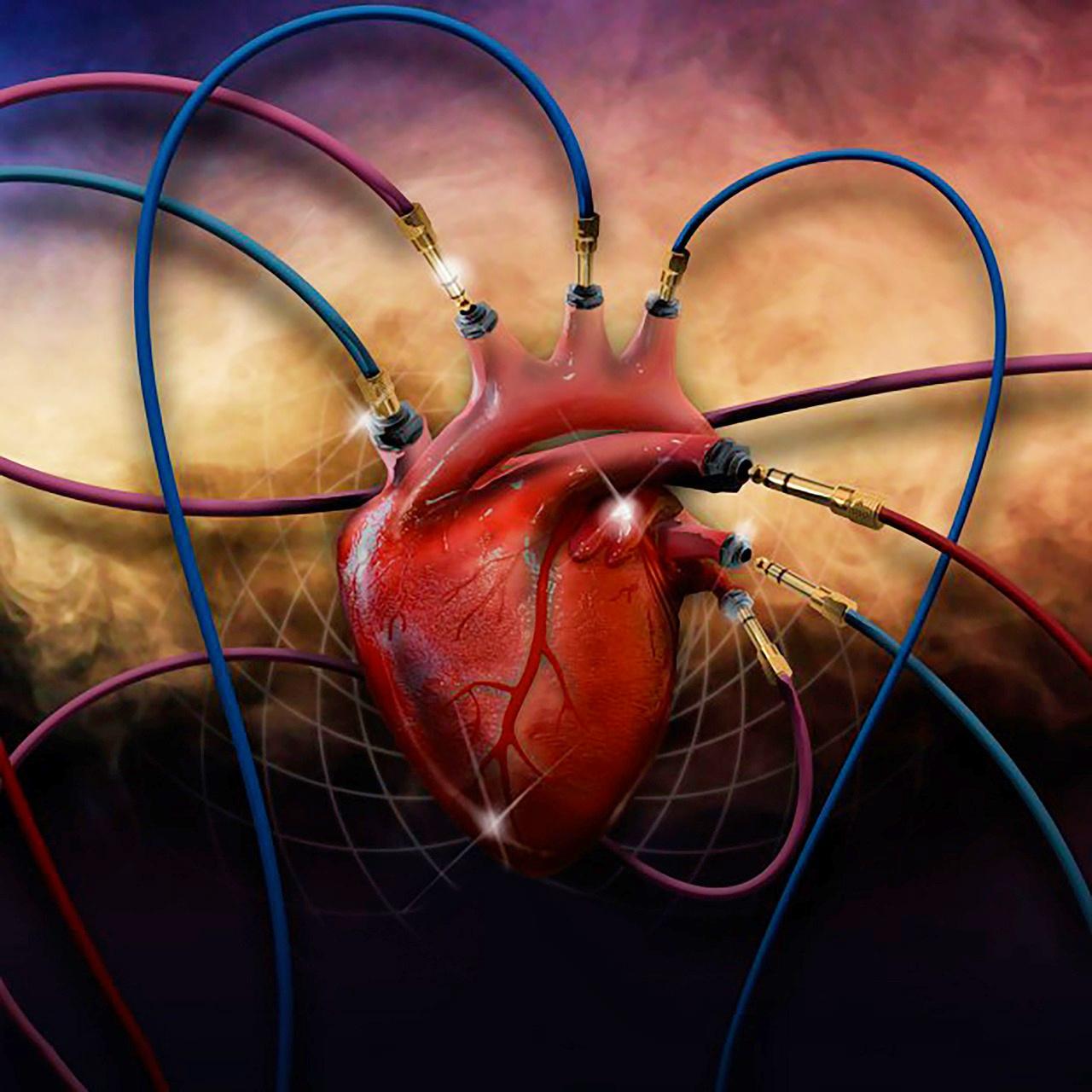 heart-2560532_1280.jpg
