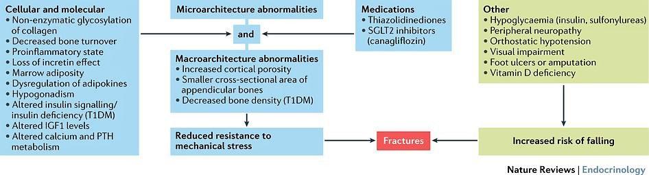 Diabetes to Osteoporosis.jpg