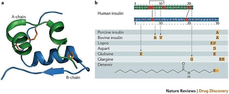 Perfect Insulin