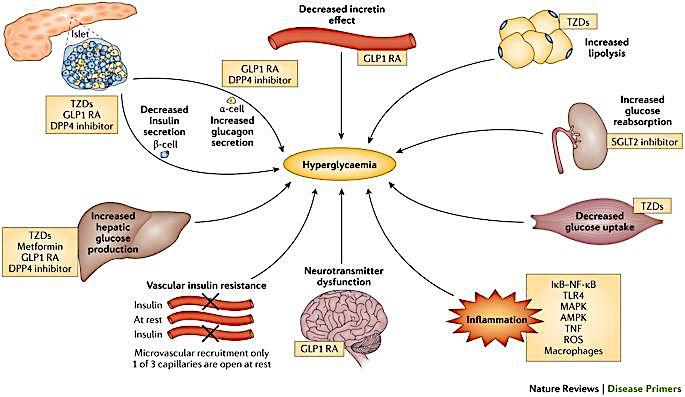 Diabetes Nature Review.jpg