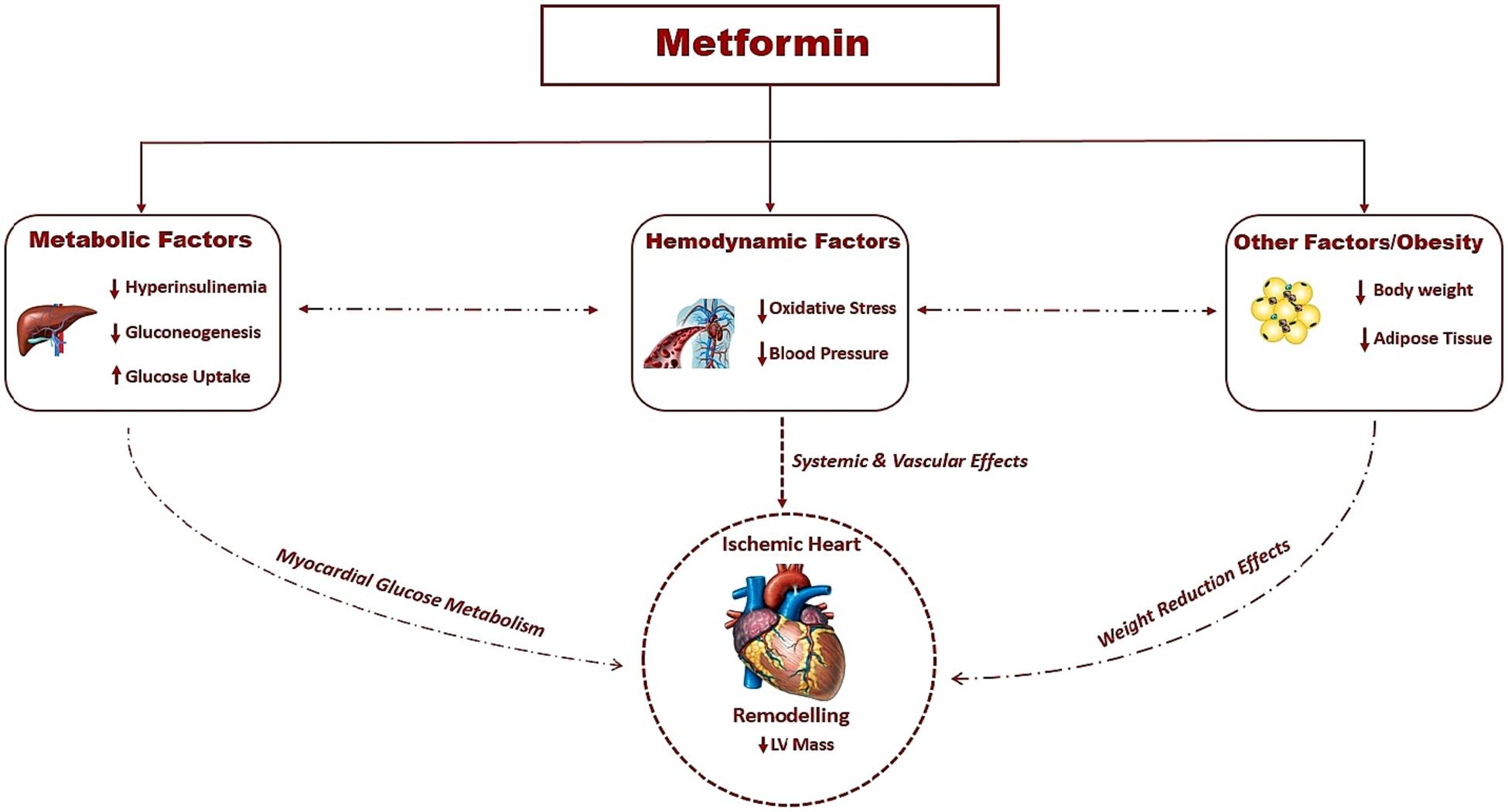 Metformin CVD.png