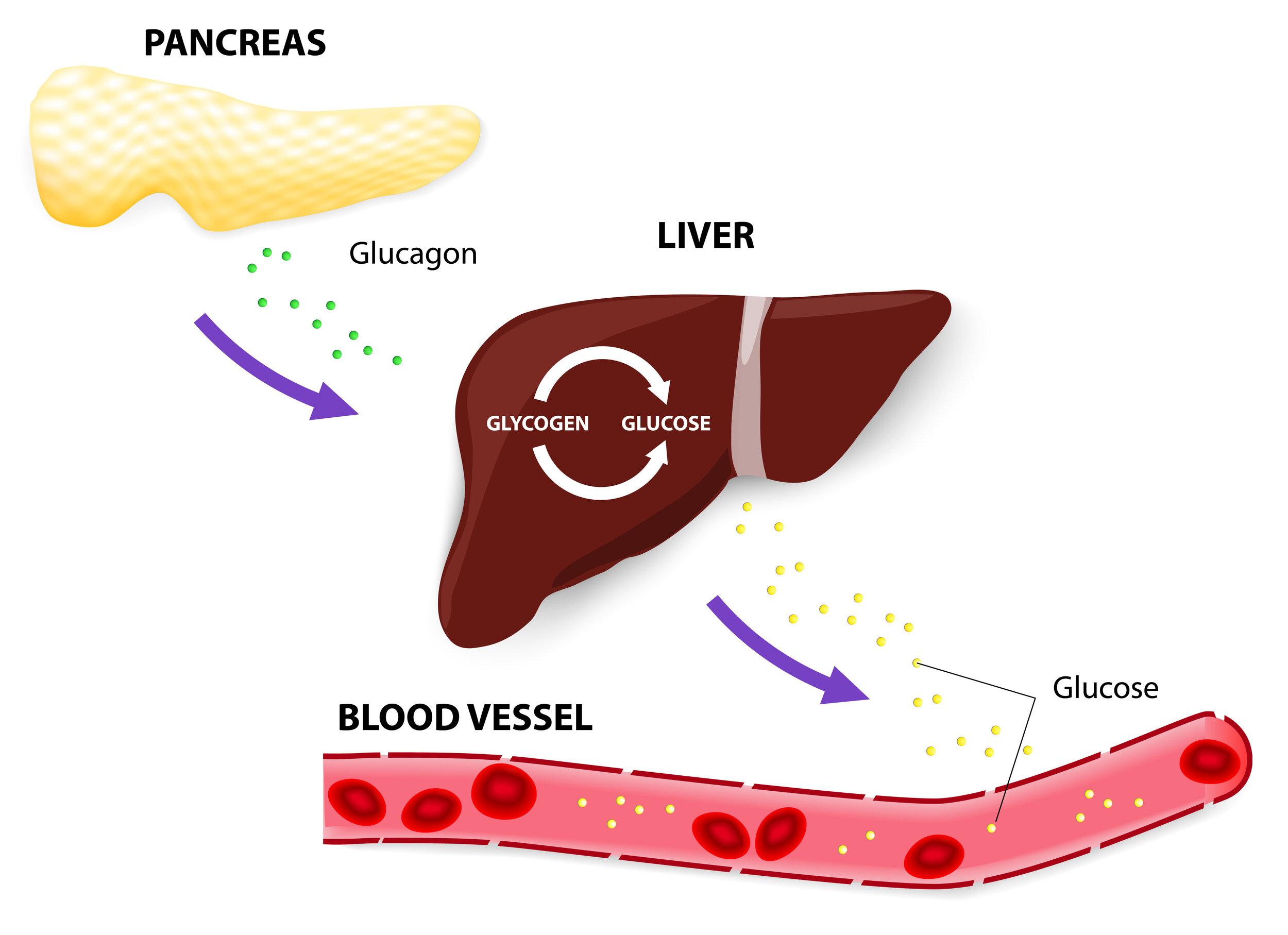 Glucagon receptor antagonist: a diabetes drug development — GT Health,  Endocrinology