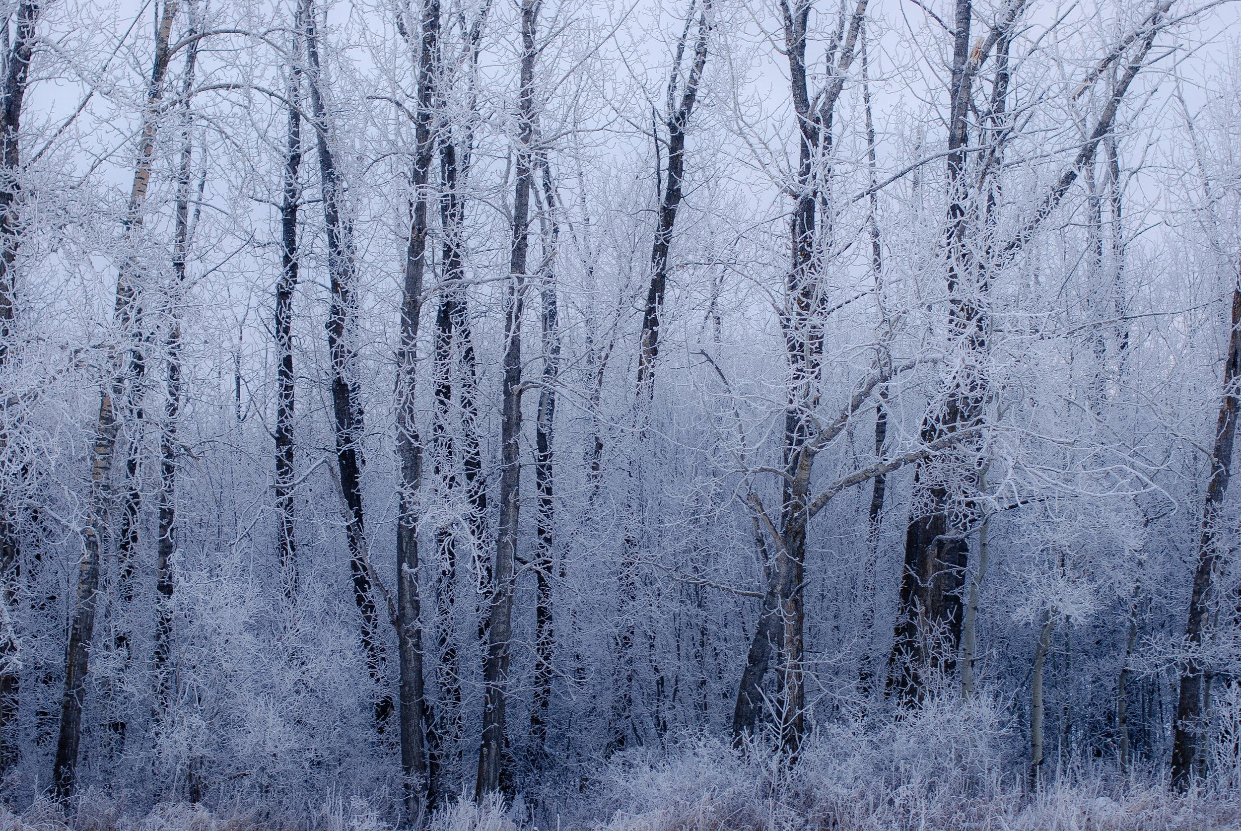 05-jan frost day-63.jpg