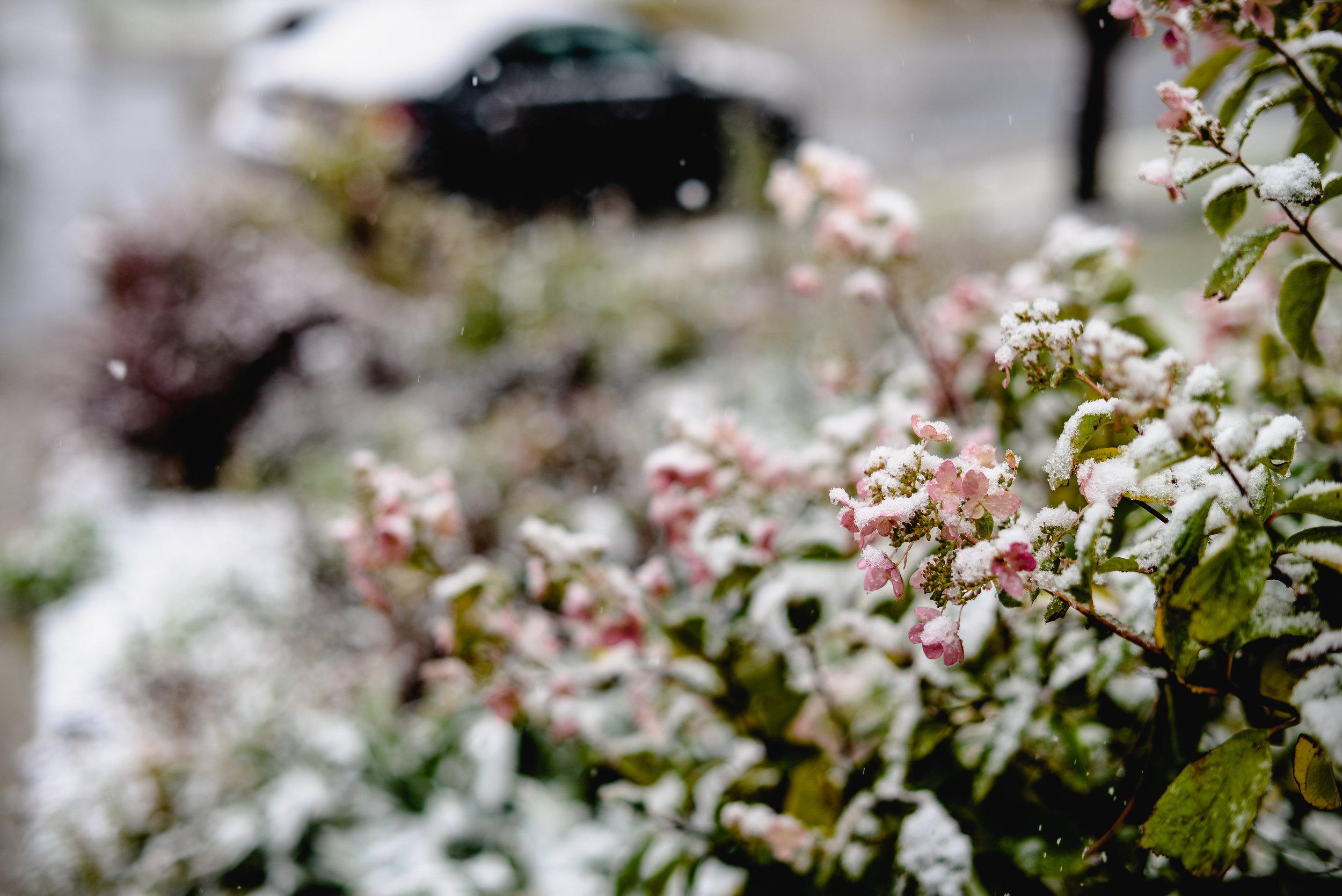 september snow edmonton