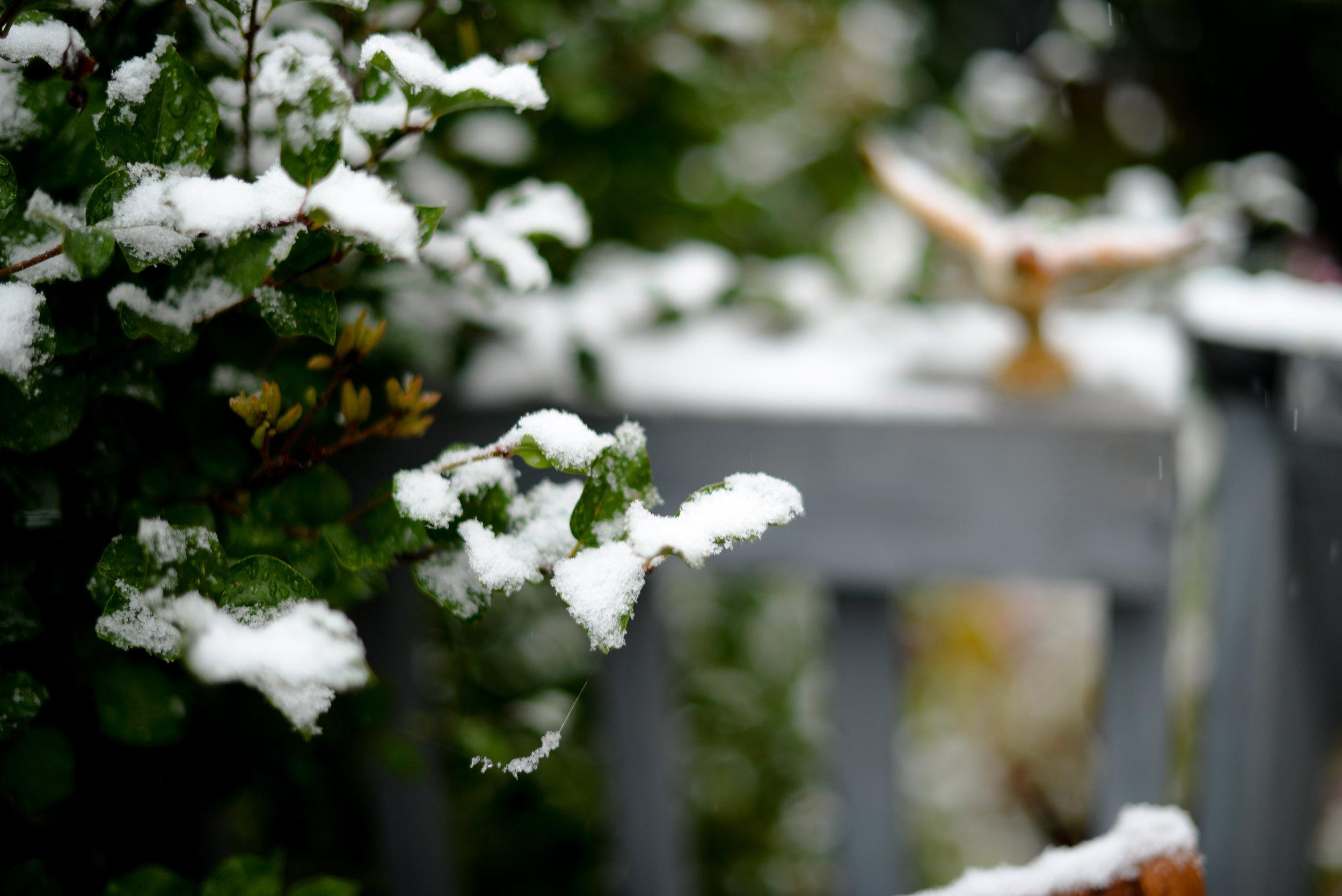 04-snow in september-11.jpg