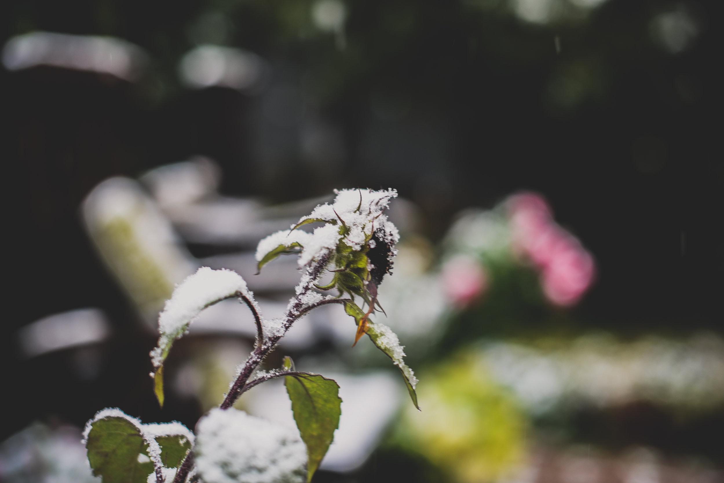06-snow in september-19.jpg