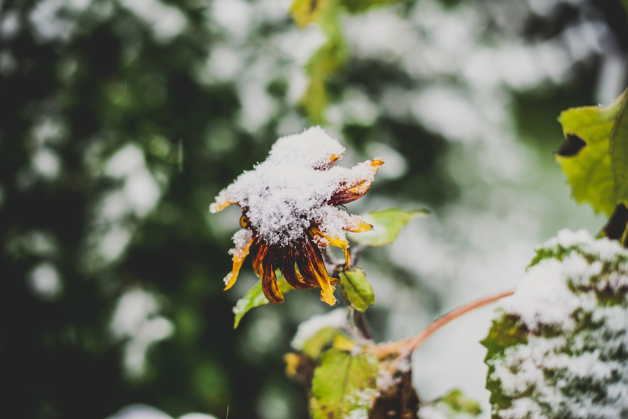 07-snow in september-21.jpg