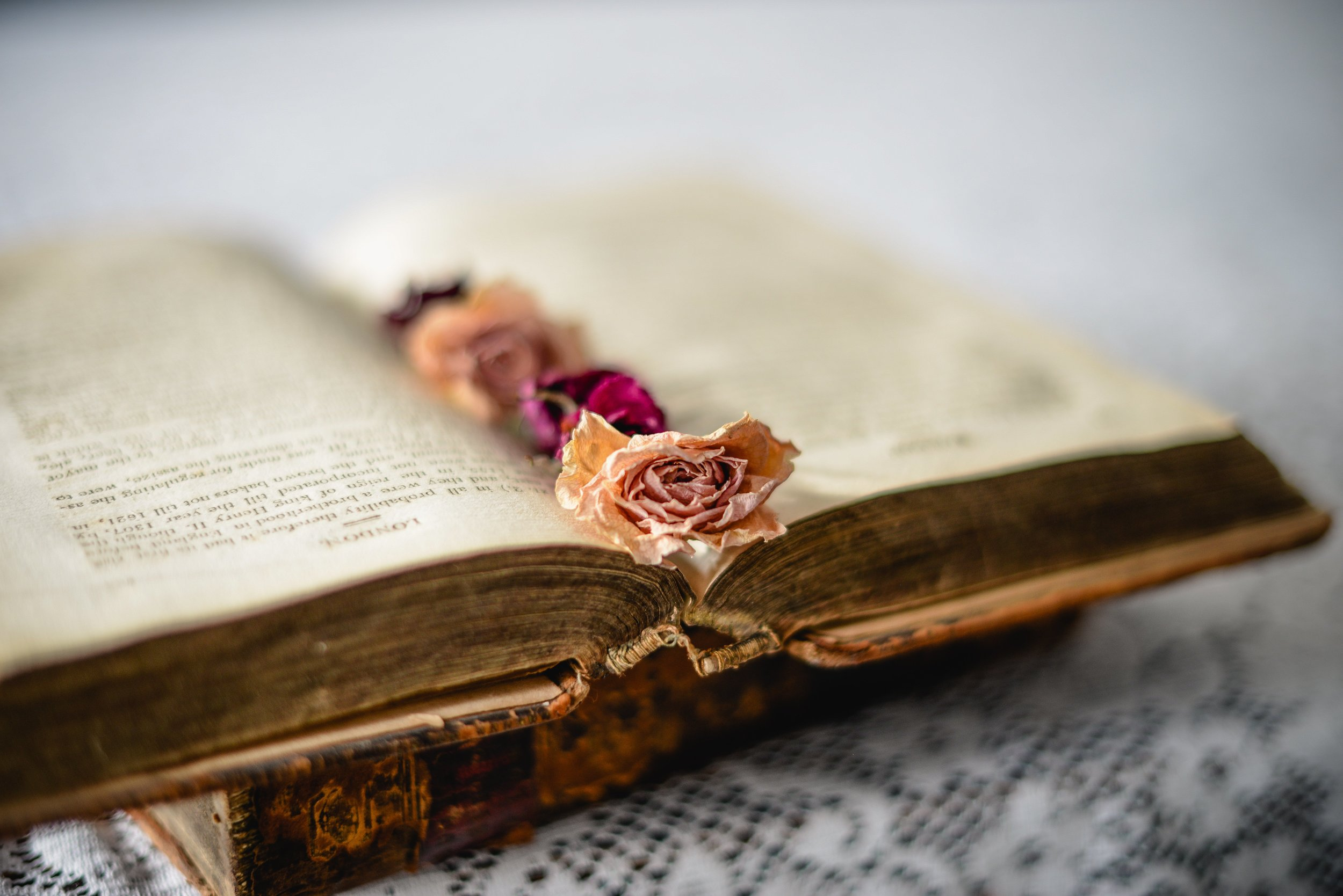 open book with dried flowers