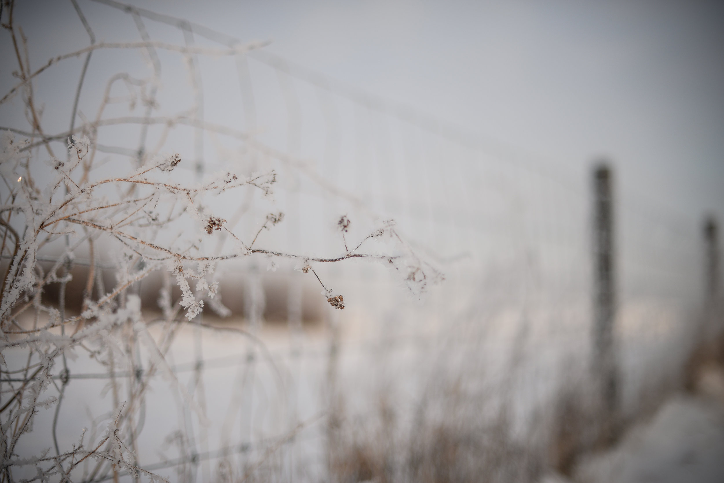 fence and frost