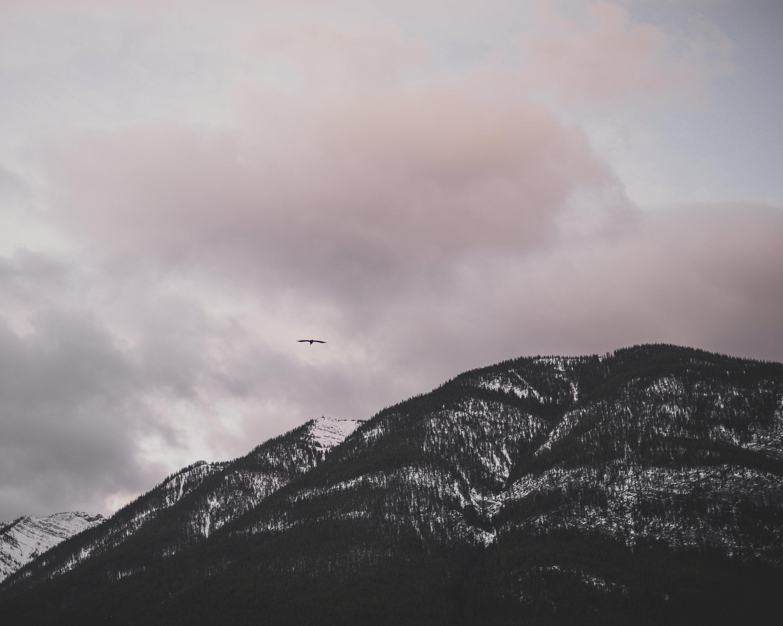 mountains and bird