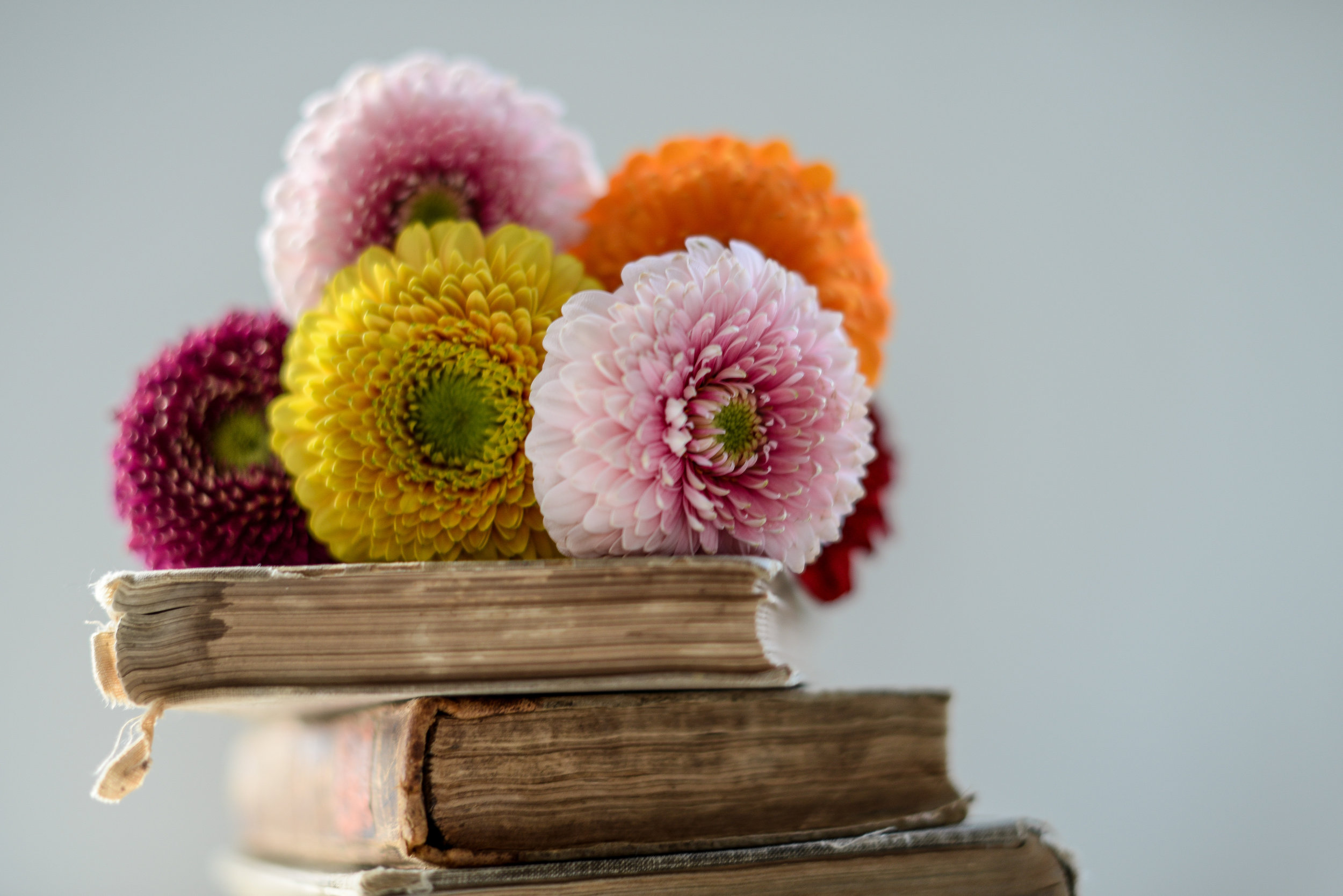 books and colourful daisies