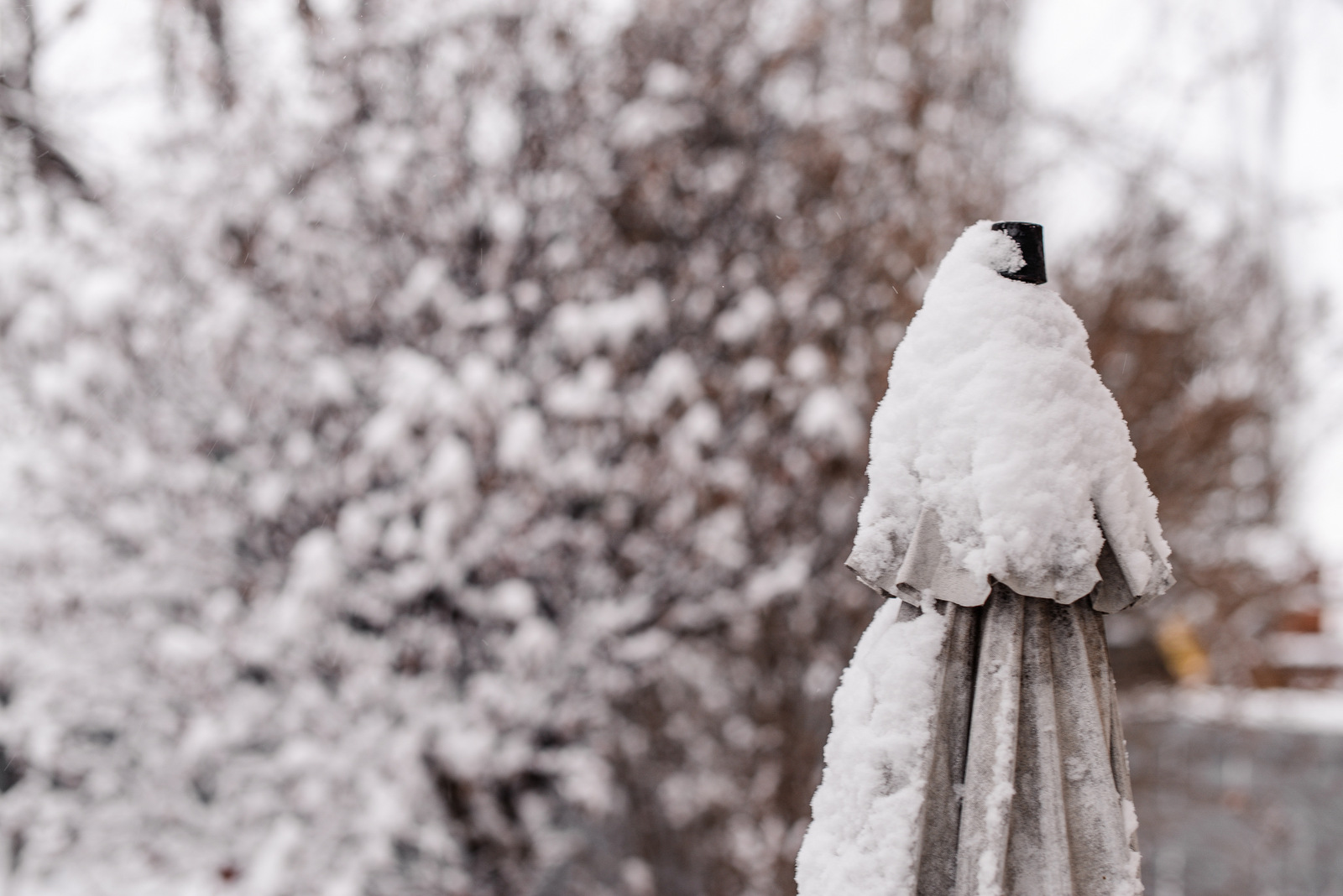 03-snow day-2.jpg