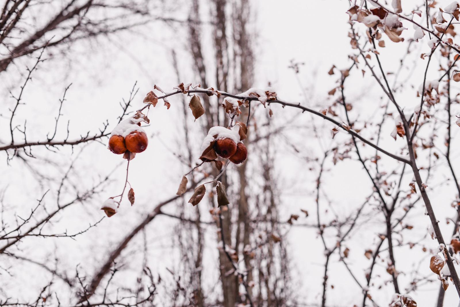 04-snow day-8.jpg
