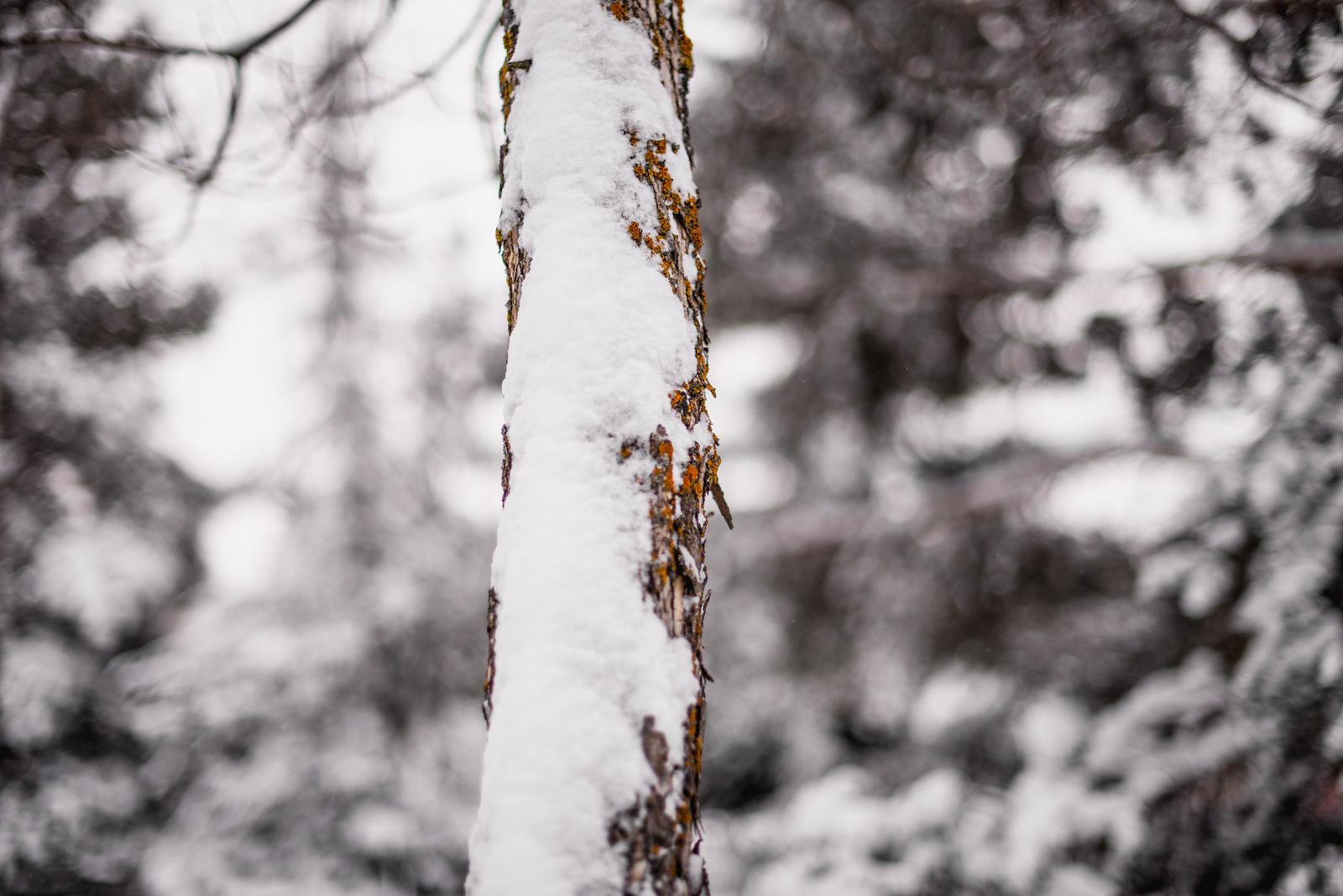 08-snow day-24.jpg