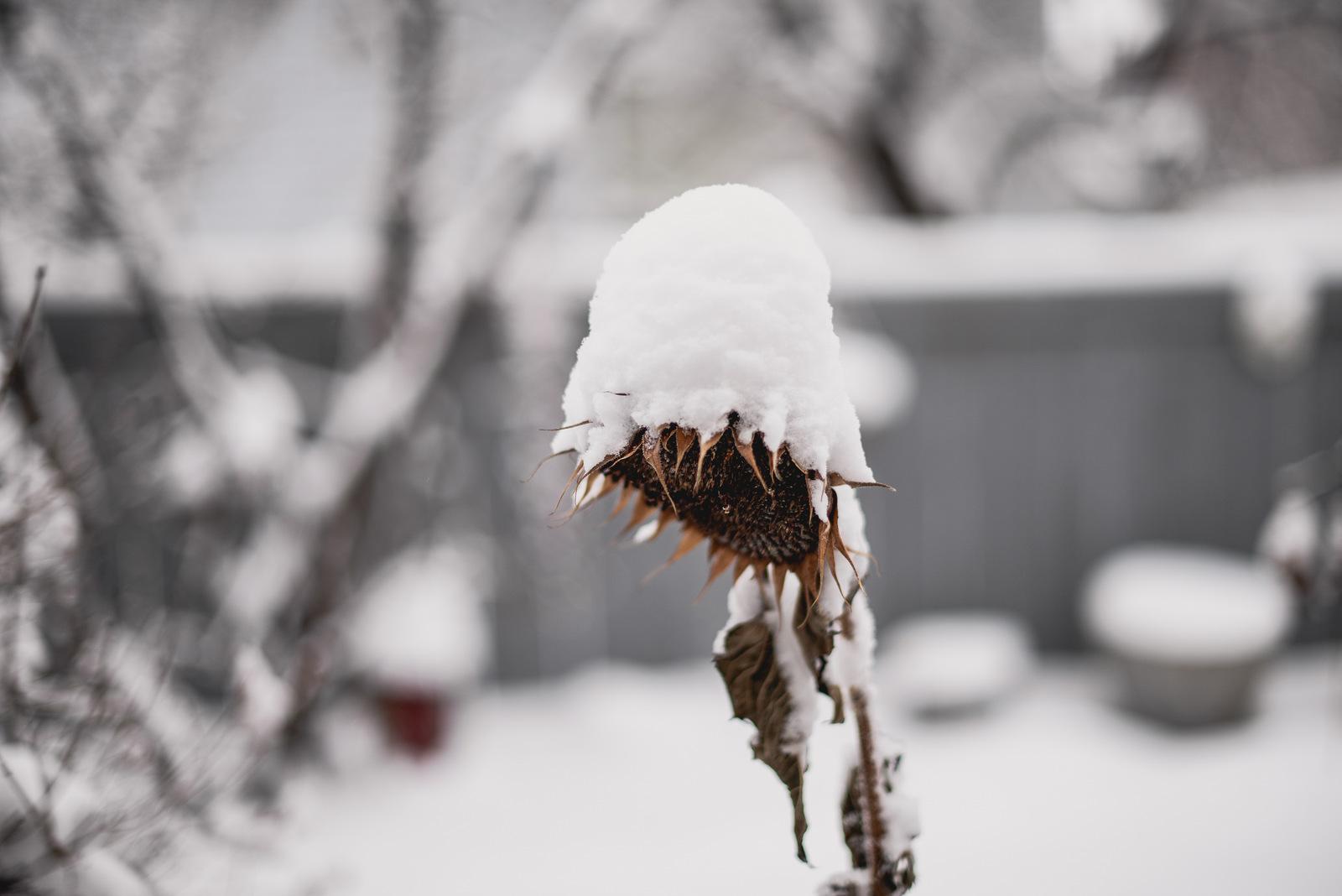 10-snow day-42.jpg