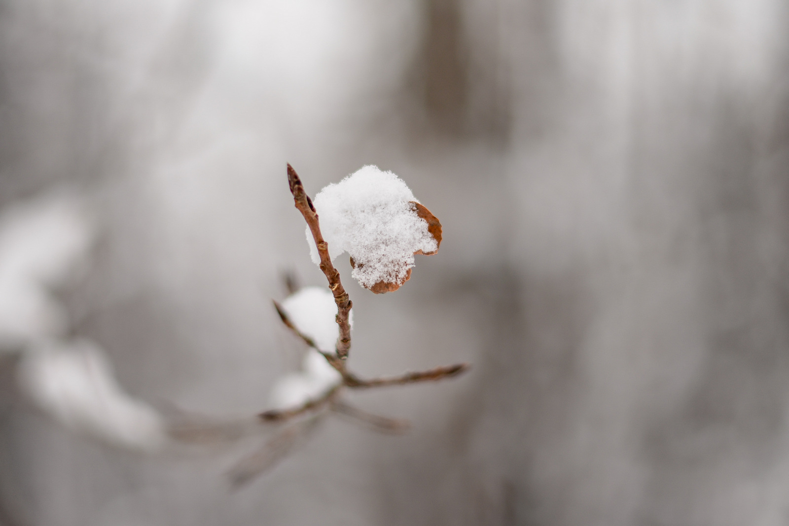 13-snow day-68.jpg