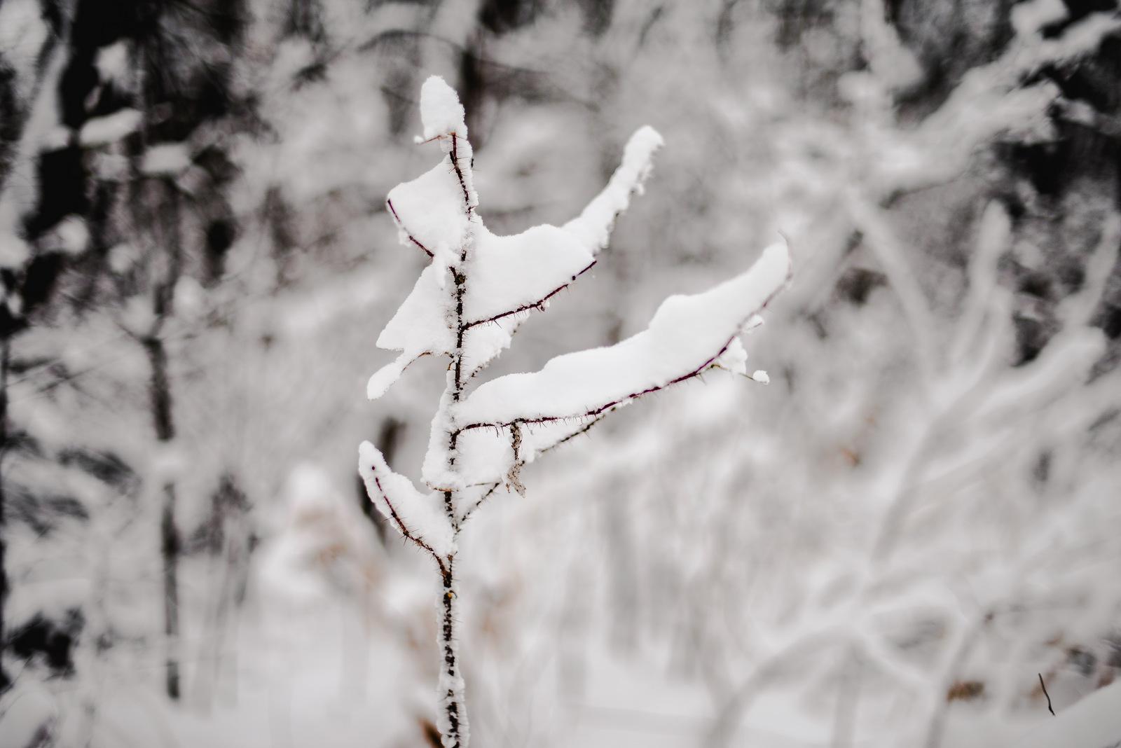 14-snow day-69.jpg