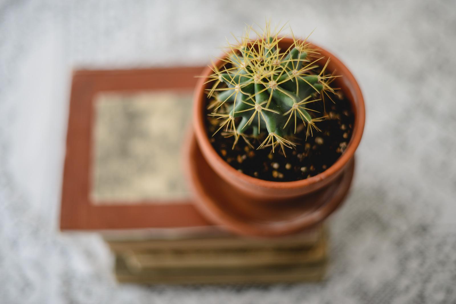 cactus and books