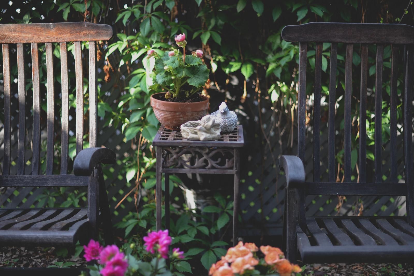 backyard in the summer