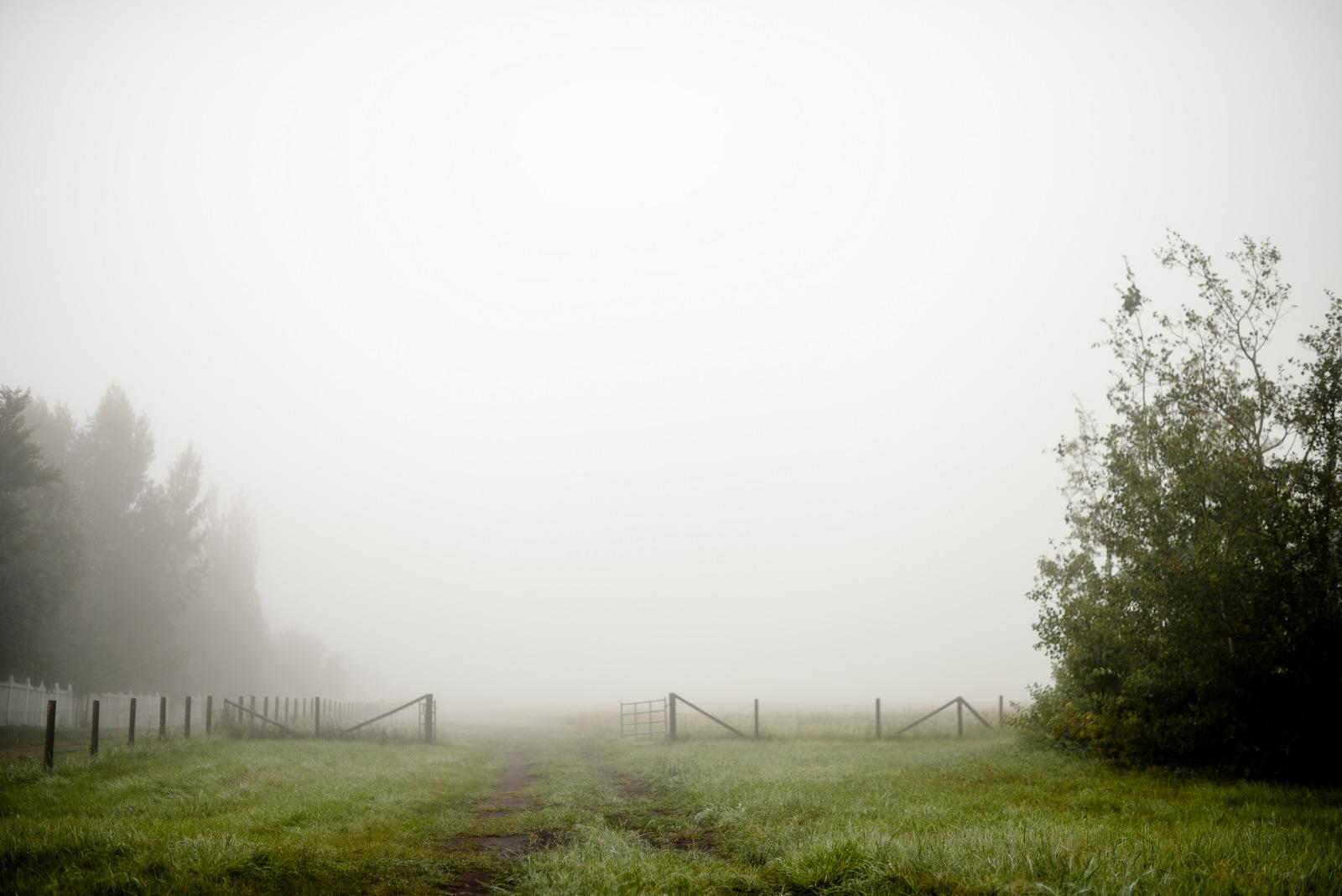 fog and gate