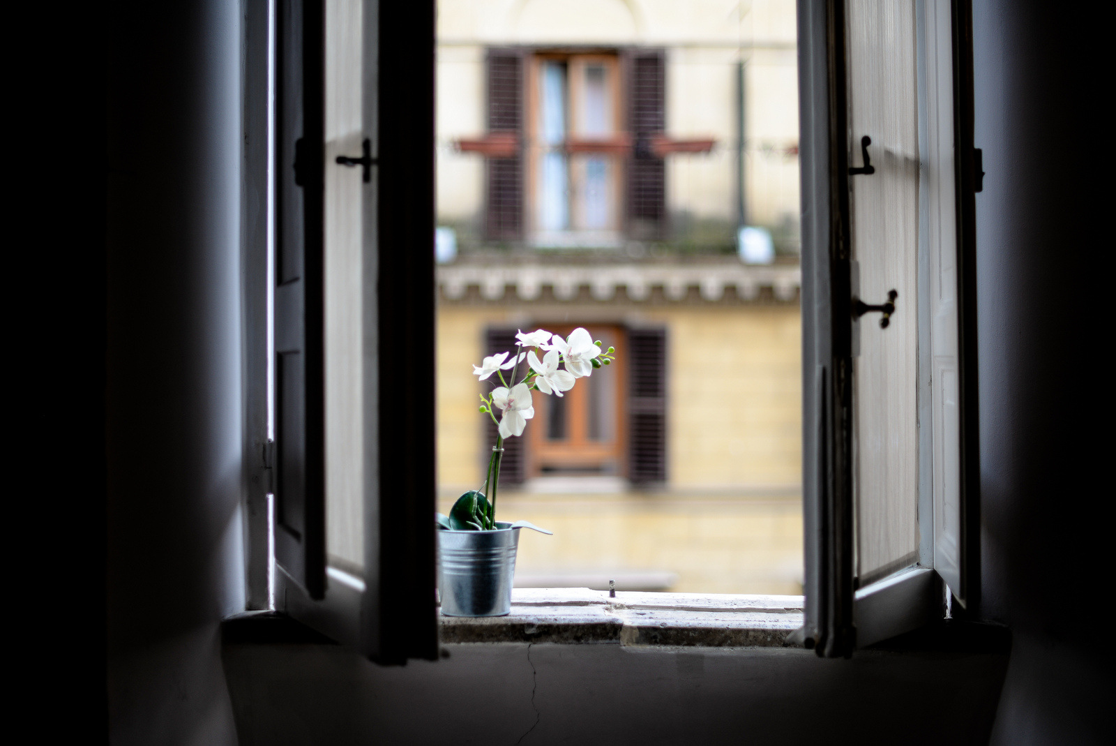 orchid on a windowsill