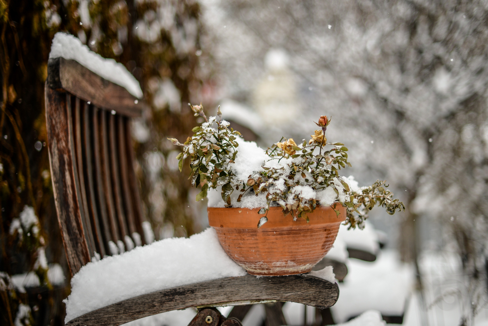 snow scene Edmonton