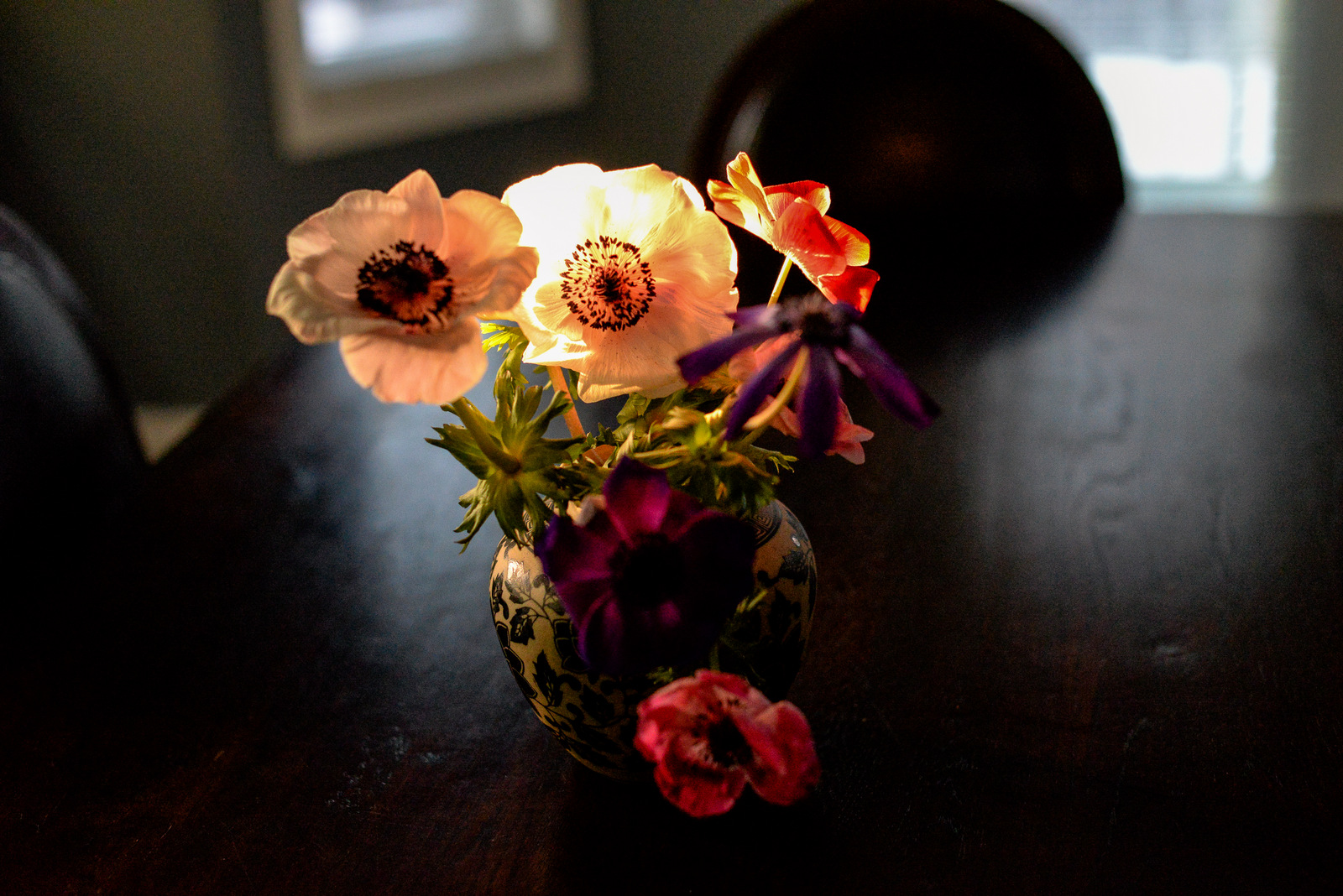 anemones in March light