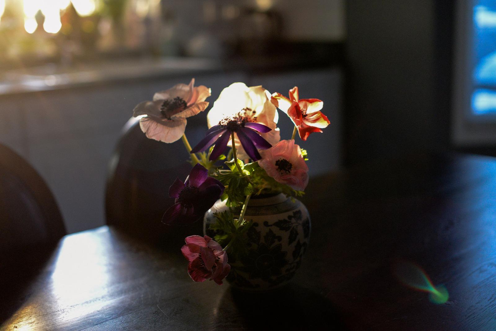 3-anemones-9-2.jpg