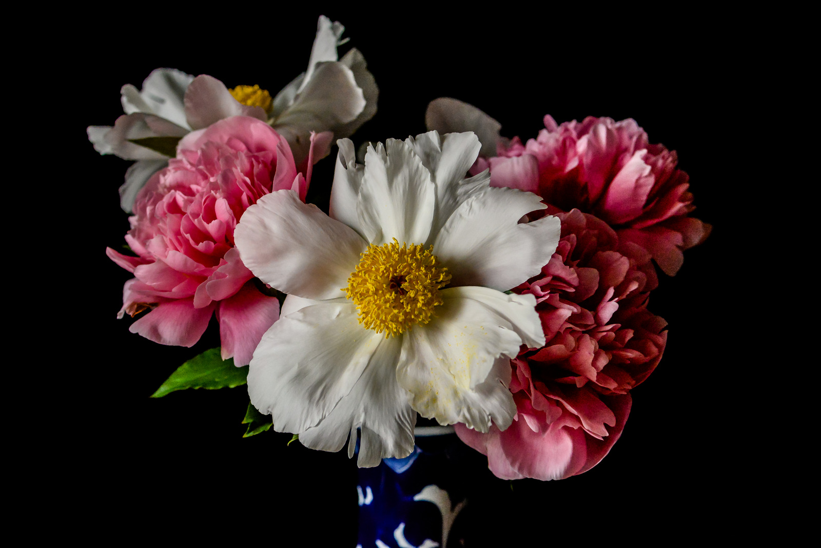 peonies photo by shawna lemay