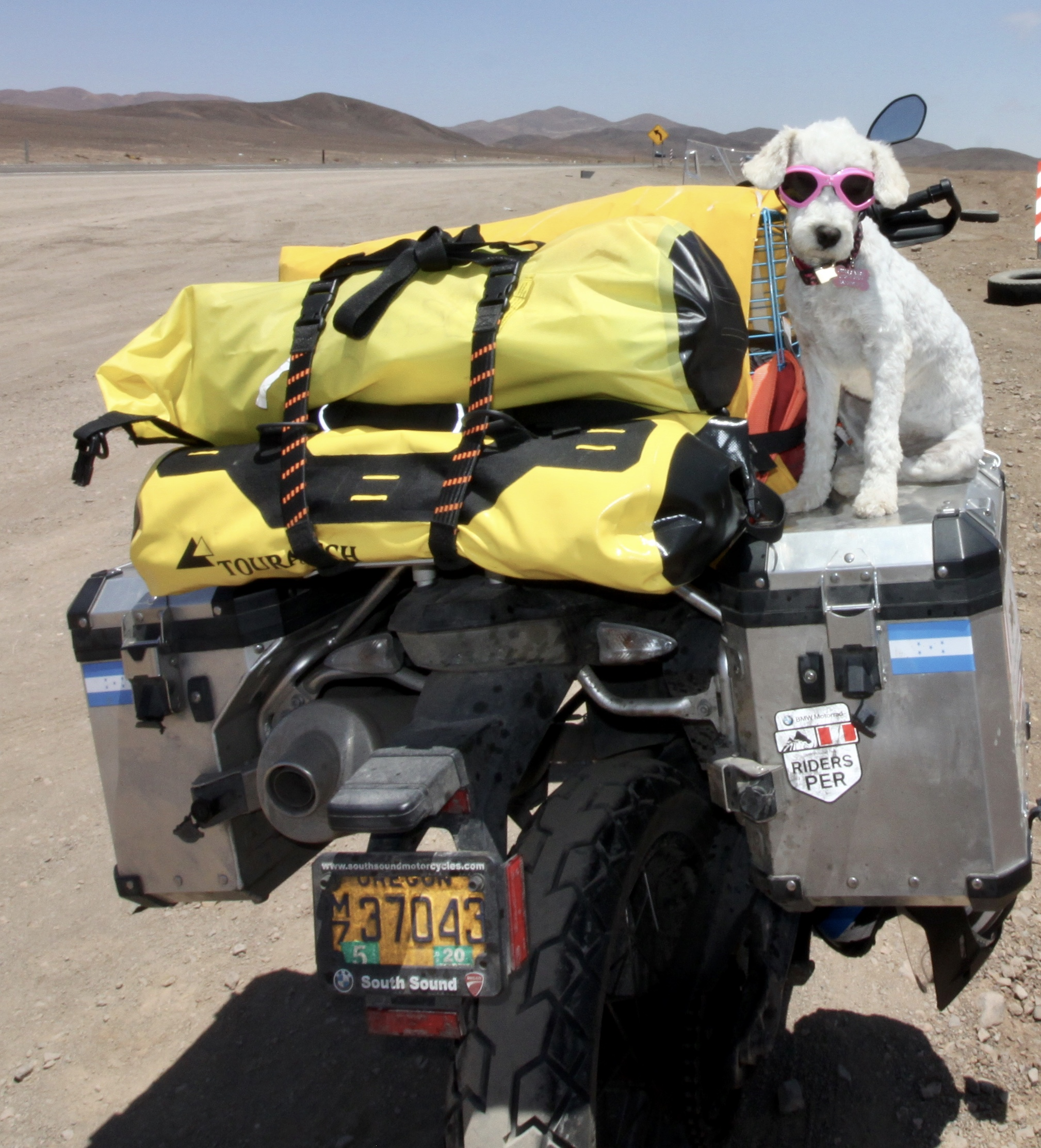 Suri is ready to hit the road and rescue that little dog.