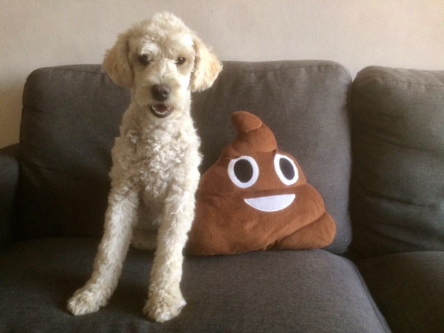 """Suri: """"Rescue missions make me nervous so I opt for eating garbage when Omar isn't looking. Sometimes that means I'm up all night making messes on the floor. Thankfully, Omar and Ernesto both took excellent care of me."""""""
