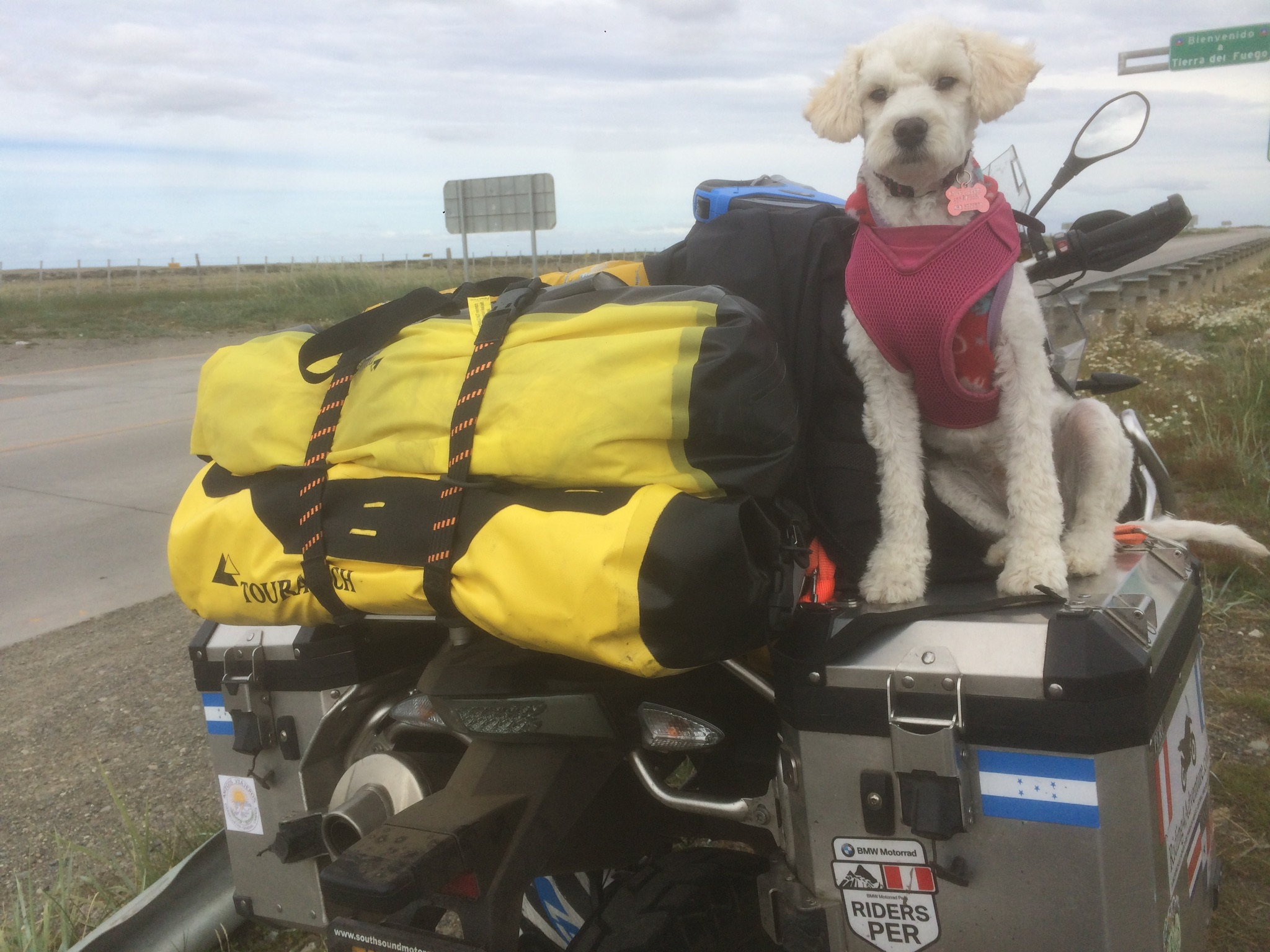 This is Suri while on the road. She traveled with me on the motorcycle to Tierra del Fuego and is now home with us in Portland.