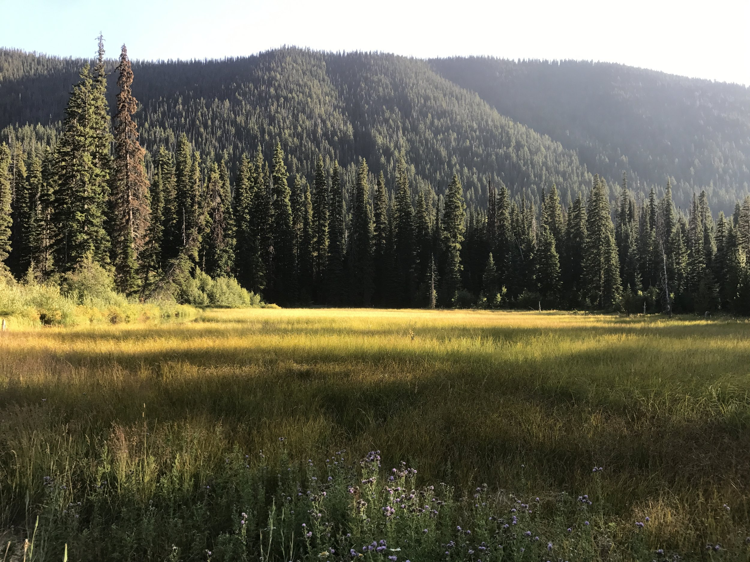 Beautiful meadow at sundown in Manning Park.