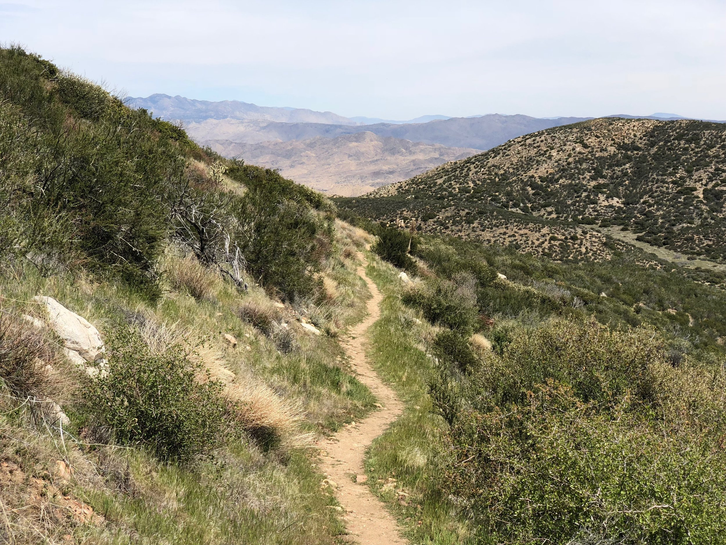 Typical section of the trail.