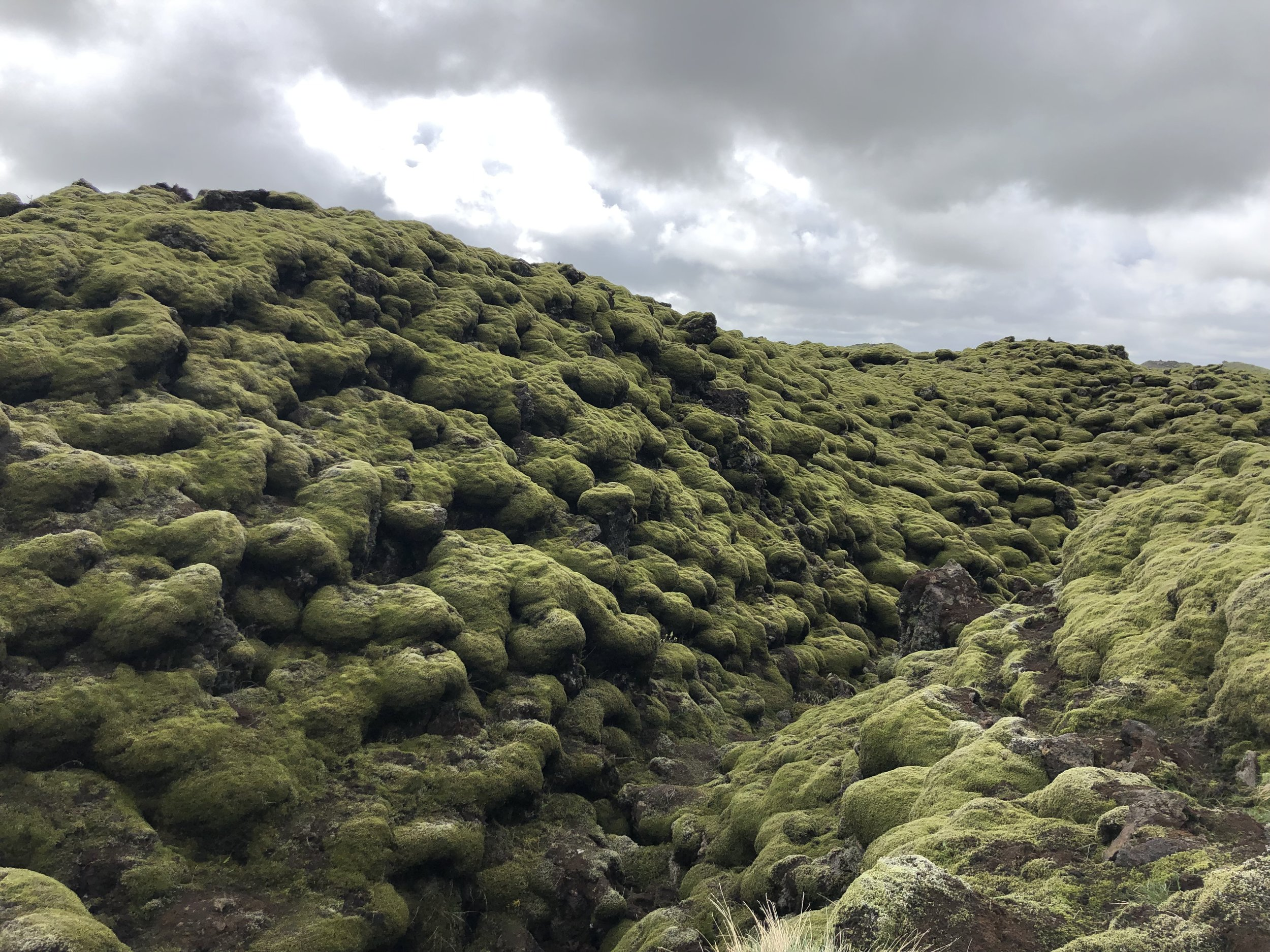 Moss covered lava.