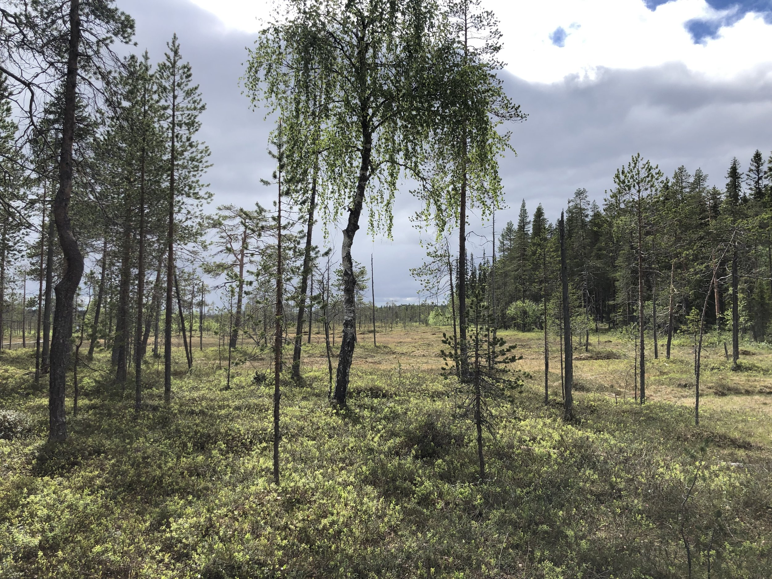 One of the hikes we took was through a bog in a national park in central Finland.