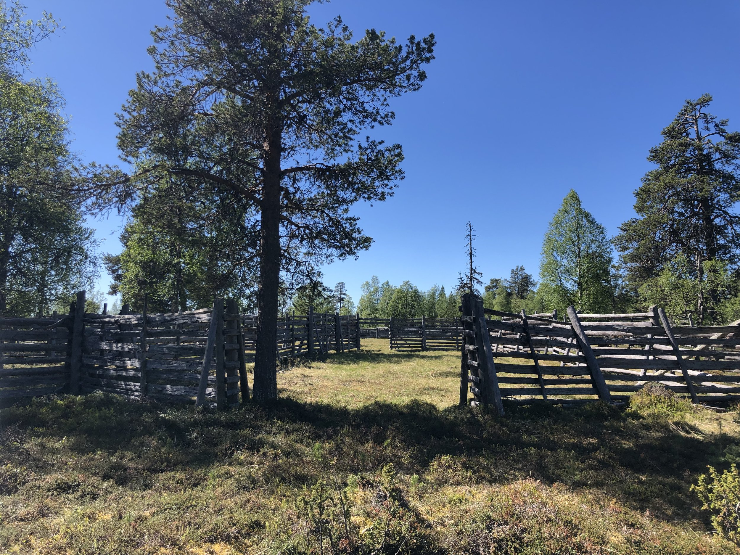 Sami (name of the native peoples in this part of Finland) built these corrals in the middle of the forest for their annual reindeer roundup.