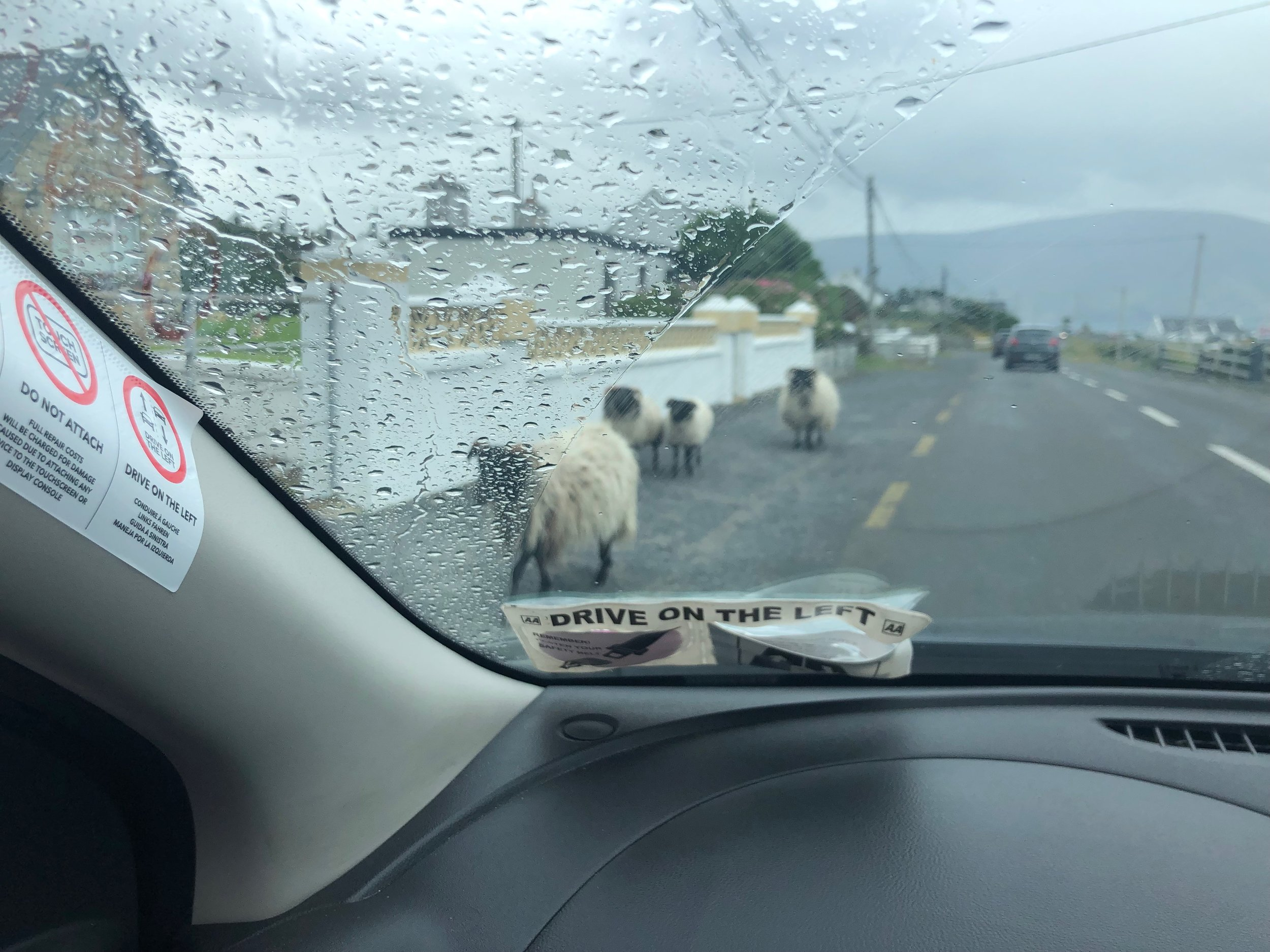 Sheep are everywhere in Ireland, and they don't seem to have any fear of cars. Several times we encountered sheep like these walking alongside the road.