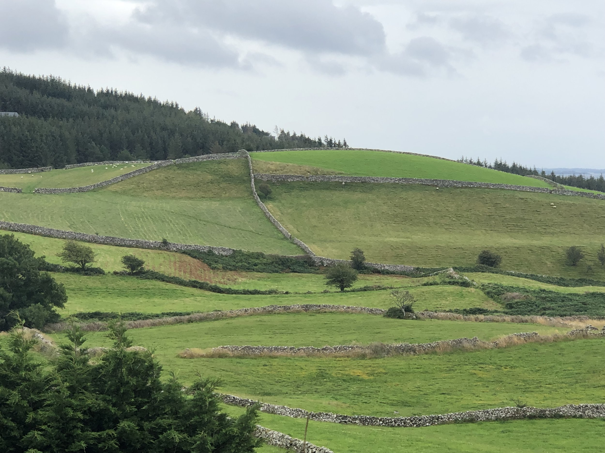 I was totally blown away by the stone fences that saw throughout Ireland. These industrious people cleared the land of boulders and used the stones to build fences like the ones in this picture. It is mind boggling to consider how much labor was invested to do this work..