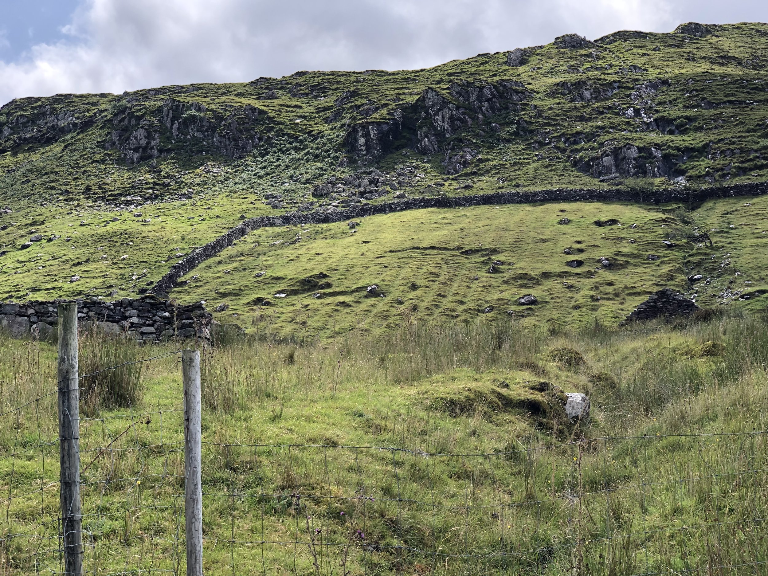 This field is where potatoes were once planted and harvested. See the ridges up the hill. That all came to an abrupt end in 1847 when the potato blight hit Ireland. Potatoes were the staple crop of Ireland at that time, which the peasants depended on for their daily sustenance and as a cash crop. Since the Irish only grew one variety, the blight literally wiped out their entire potato crop. Prior to 1847, there were 8 million people living in Ireland. The famine resulted in 1 million deaths due to starvation and another 2 million emigrated to the United States and other countries to avoid a similar fate. To this day Ireland's population is still less than 8 million.