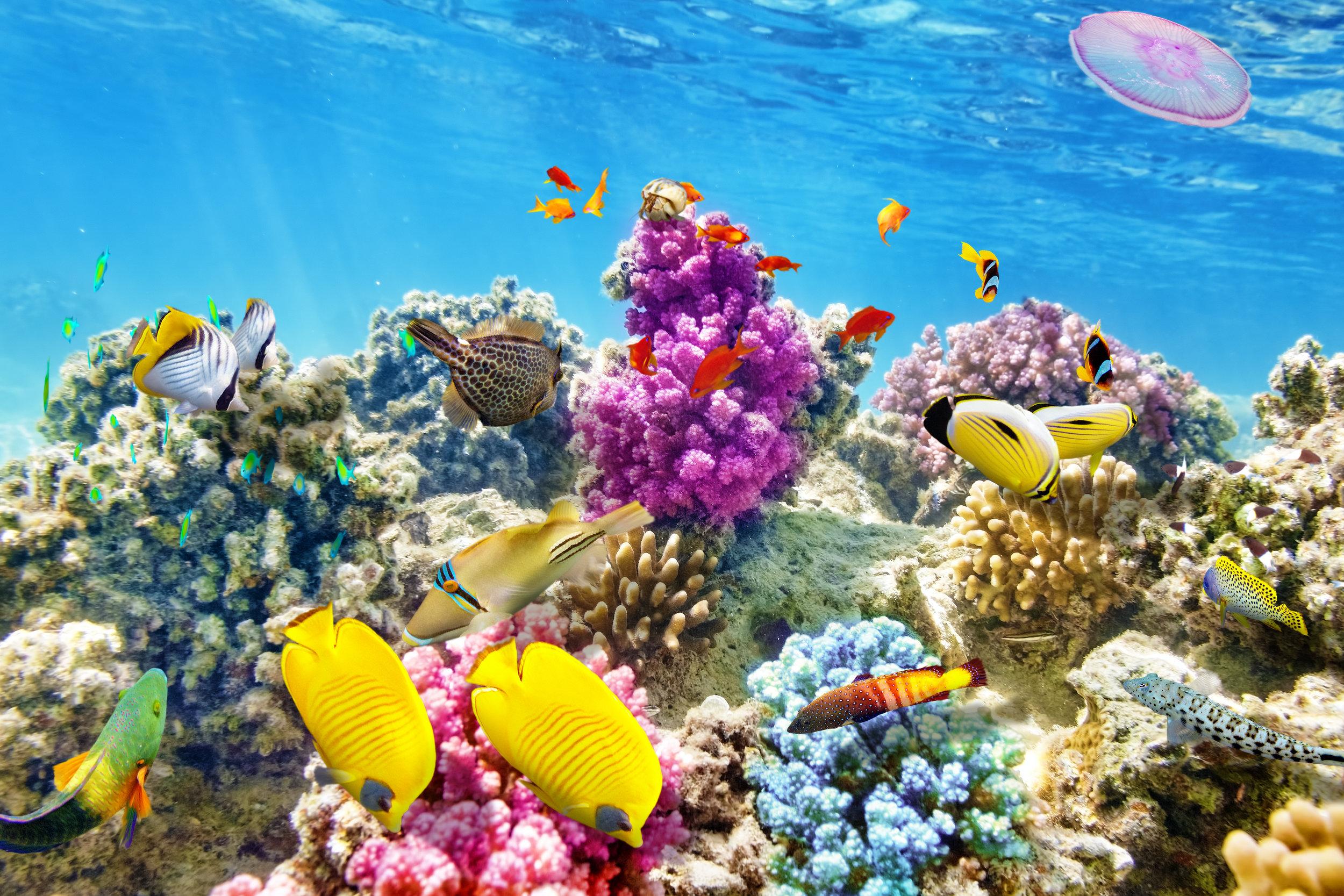 Scuba Diving shutterstock_267592205.jpg