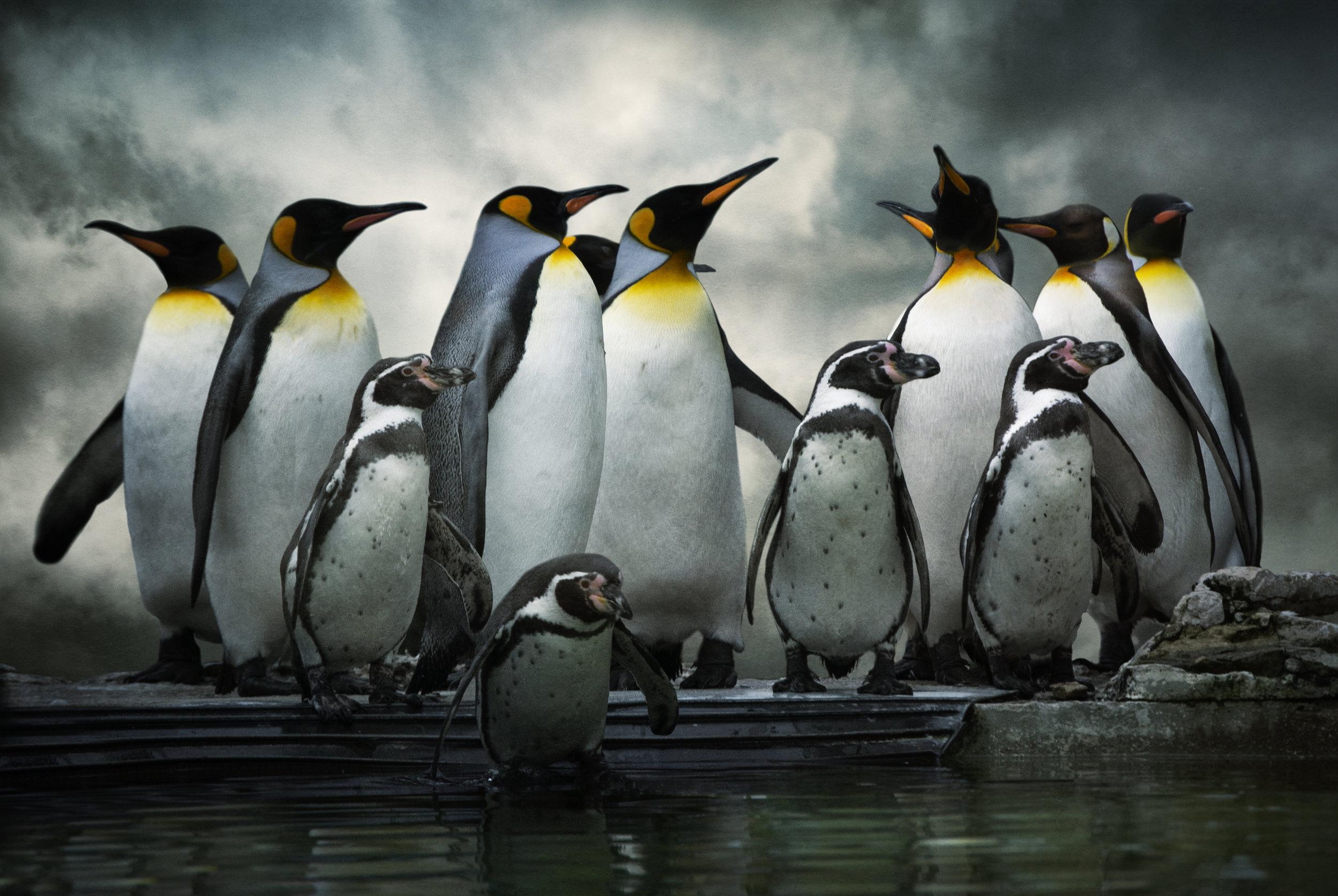 March of Penguins Antarctica shutterstock_140619154.jpg
